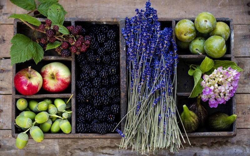 Ежевика в народной медицине, ее полезные и лечебные свойства